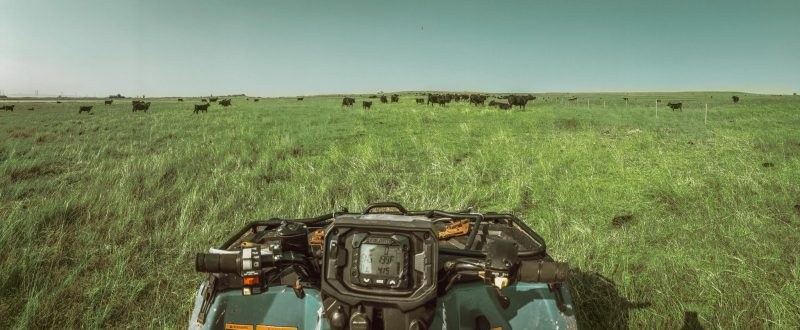 Bison & Cattle Ranching